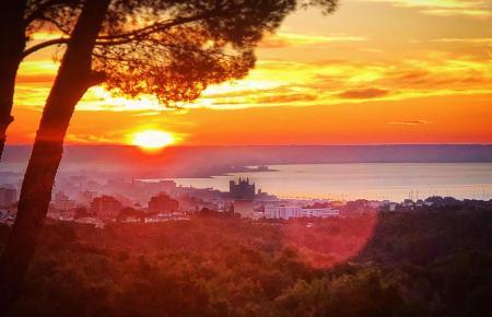 Sonnenaufgang in Palma: ein Foto wie gemalt. Der Blick fällt von Son Vida aus auf die Kathedrale.