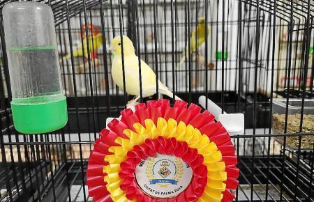 Mit seinen Kanarienvögeln hat der Verband bereits zahlreiche Wettbewerbe gewonnen.