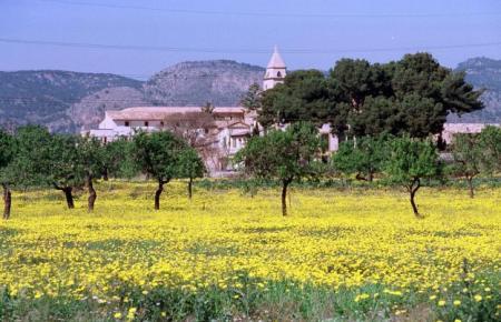 Am 20. März ist Frühlingsbeginn. Die Temperaturen auf Mallorca sollen höher sein als im Vorjahr.