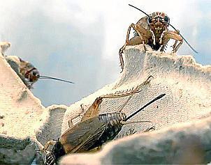 Eierschachteln und Weinkartons bieten den Insekten natürliche Schutzräume.