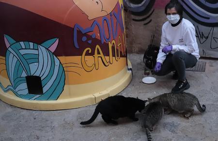 Auch in Zeiten des Coronavirus kümmert sich Mercedes Argüello um Katzen.
