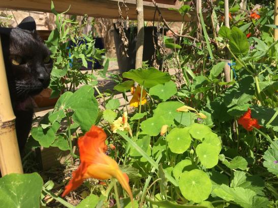 Gartenbild mit schwarzer Katze.