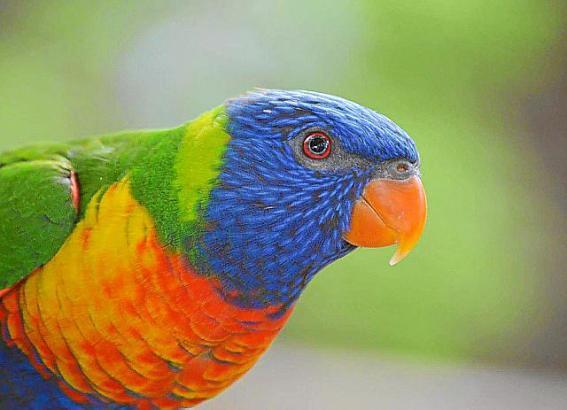 Auch hier steht Nachwuchs ins Haus: Die Papageien im Natura Parc Santa Eugènia sind derzeit am Brüten.