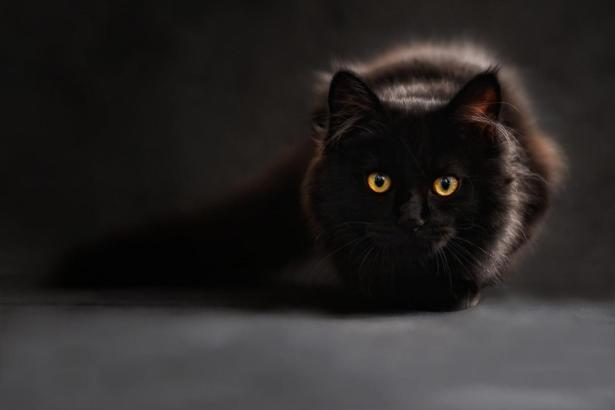 Auch Katzen sind nicht gefeit vor dem tückischen Keim.