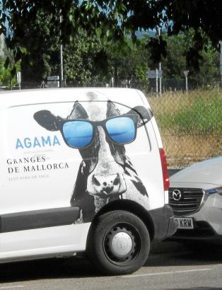 Diese Kuh, die auf den Milchpackungen zu sehen ist, ist schon ein echter Insel-Star.