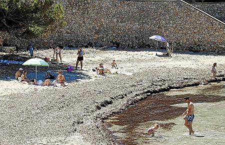So zeigten sich die Strände in der Gemeinde Andratx vergangene Woche. Hier der Strand von Sant Elm.