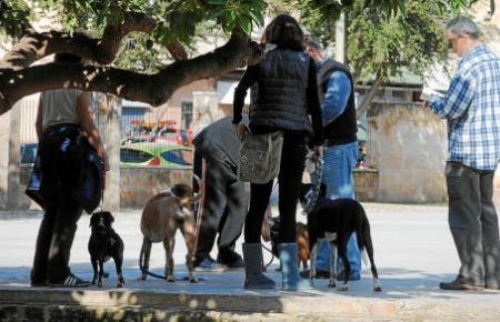 Hundebesitzer sollen auf mehr Hygiene achten. Das hat die Stadt Inca jetzt festgelegt.