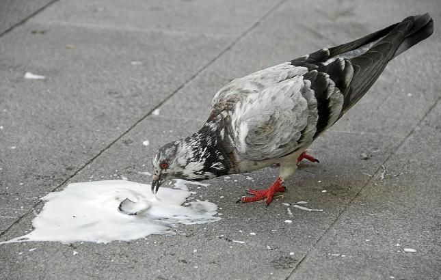 Die Kreaturen flößen nicht wenigen eine schwer ergründliche Angst ein.