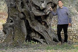 Seit Jahren in der liebevollen Pflege der Familie. Nun hat Tomeu Deya den Baum in den Wettbewerb geschickt und direkt gewonnen.