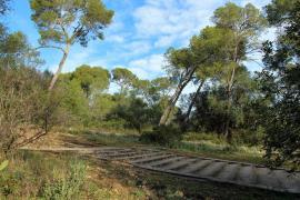 Palma will Zahl der Wege im Bellver-Wald verringern