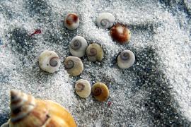 Was alles zum Verschwinden von Tierarten im Meer vor Mallorca führt