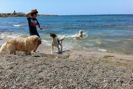 An diesen Stränden sind Hunde erlaubt