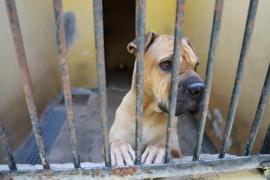 Deutlich weniger Hunde auf Mallorca ausgesetzt