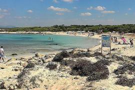 Strandtipp auf Mallorca: Peregons Grans bei Colònia de Sant Jordi