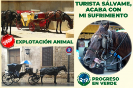 Aktivisten auf Mallorca starten Kampagne zum Schutz der Kutschpferde