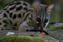 TV-Tipp: Die Tierwelt in Spaniens wildem Süden