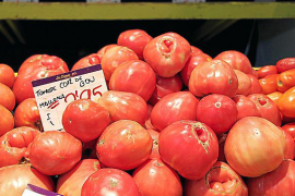 Diese Tomaten wachsen auf Mallorca