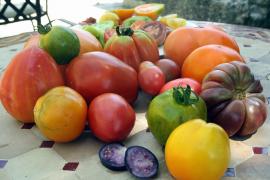 Als Snack, Sauce oder Salat –Tomaten sind aus der Inselküche nicht wegzudenken.