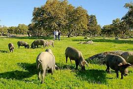 TV-Tipp: Wie geht es den Schweinen?