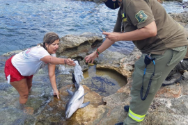 Delfin-Drama in Cala auf Ibiza