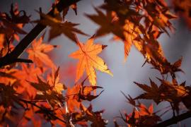 Auffallend warmer und feuchter Herbst für Mallorca vorausgesagt