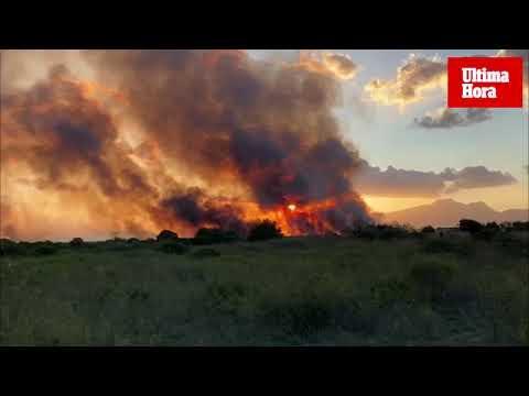 Großbrand in Mallorcas Feuchtbiotop S´Albufera