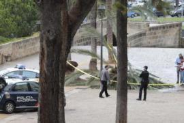 Angehörige der von Palme erschlagenen Frau fordern Schadensersatz