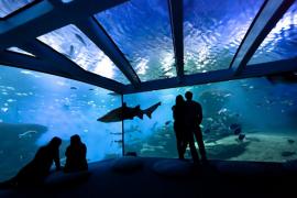 Palma-Aquarium auf Mallorca macht erstmals vorübergehend zu