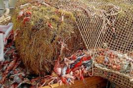 Heuballen in Fischernetzen vor Mallorca sorgen für Ärger