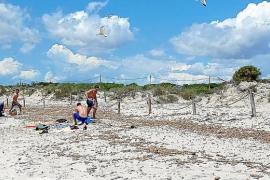 Neue Studie: Es-Trenc-Strand droht wegen Klimawandel Untergang