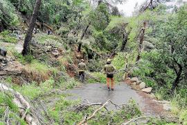 Die Forstarbeiter sind mit Spezialgerät in der verwüsteten Landschaft zugange.