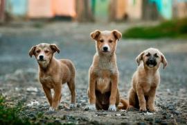 Vielen an Weihnachten auf Mallorca verschenkten Hunden droht Aussetzung