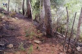 Brand auf Mallorca vernichtet 2000 Quadratmeter Wald