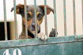 Mallorca-Regierung bereitet Gesetz zum Schutz von Haustieren vor
