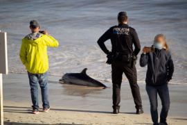 Delfin stirbt im Südosten von Mallorca auf Strand