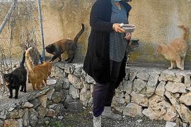 Immer mehr Katzen-Kolonien auf Mallorca