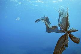 Immer mehr Plastikmüll vor Mallorca und den Nachbarinseln