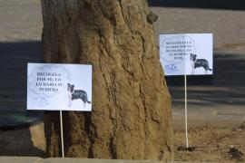 Palma plant Einführung von Hundekotregister