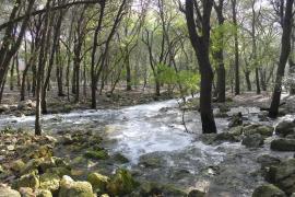Ufanes-Quellen auf Mallorca sprudeln zum ersten Mal in diesem Jahr
