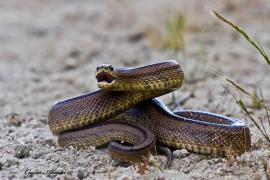 In diesen Mallorca-Dörfern gibt es die meisten Schlangen