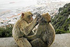 TV-Tipp: So lustig sind die Affen von Gibraltar