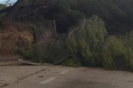 Umgestürzter Baum auf Mallorca.