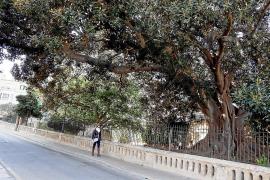 Misericòrdia: Ein Ort auf Mallorca zum Träumen – und zum Frösteln