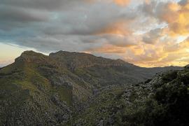 Neue Geier-Schutzzone auf Mallorca geplant