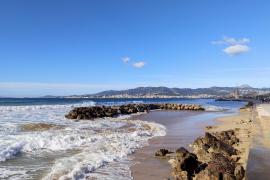 "Sturm ""Justine"" lässt Bäume auf Mallorca umstürzen"