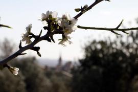 Wochendendwetter auf Mallorca durchwachsen und kühler