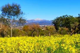 Ab Wochenmitte bis zu 23 Grad auf Mallorca