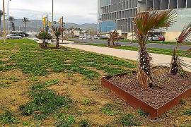 Sorge um den Garten des Kongresspalastes in Palma