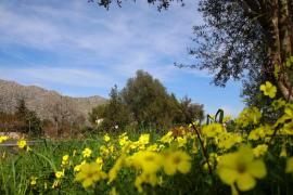 Bis zu 25 Grad: Frühling hält Einzug auf Mallorca