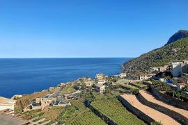 In kleinem Bergdorf auf Mallorca: Wie eine Weinsorte wieder auftaucht